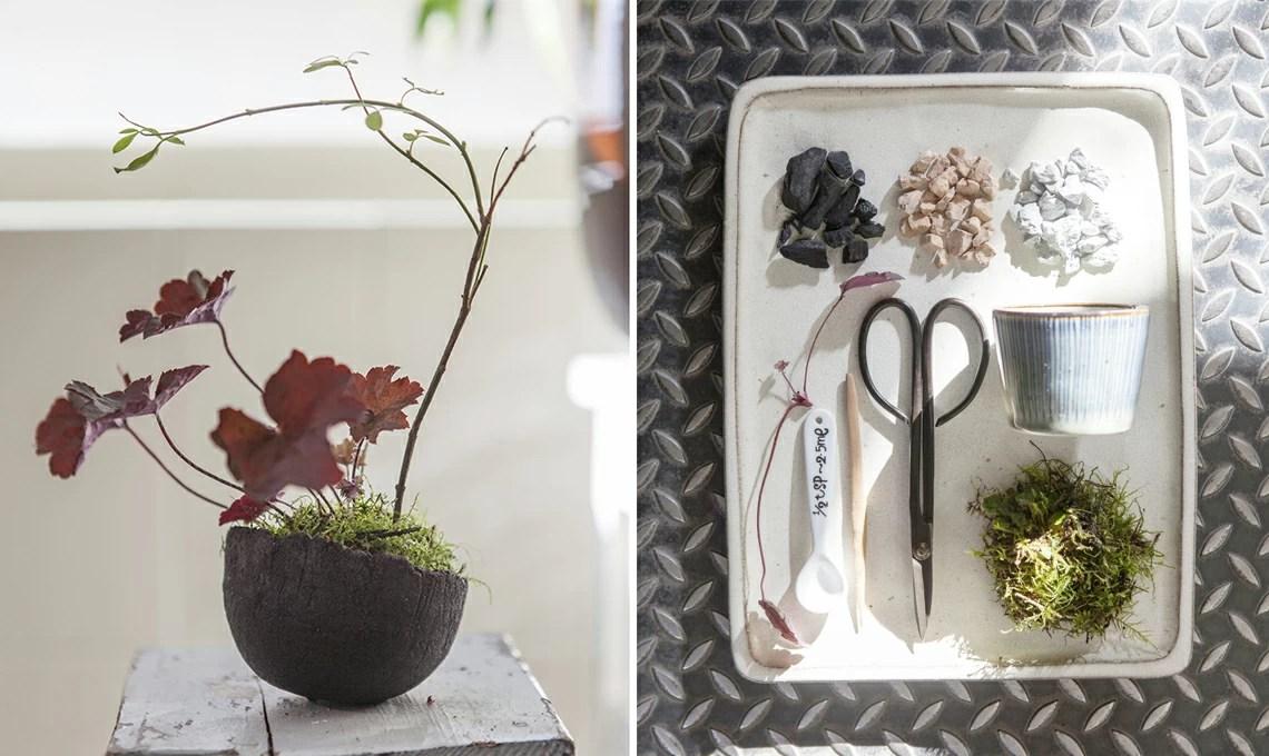 Come Fare Un Kusamono Il Mini Giardino Giapponese Casafacile