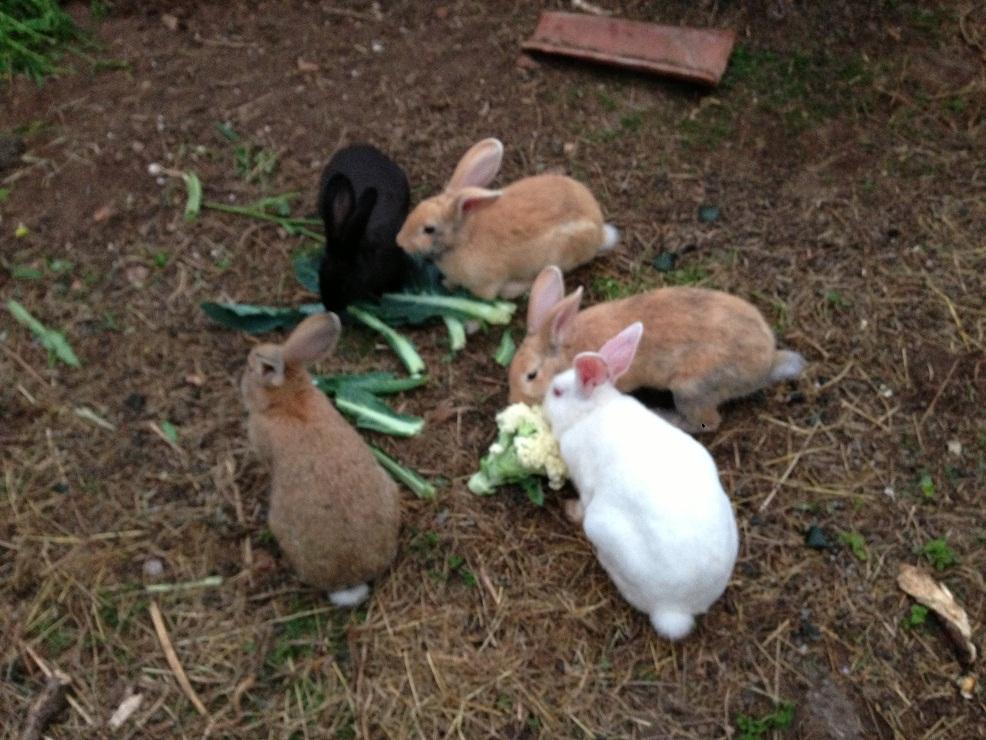 nuestros conejos viven en libertad