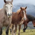 casa rural animales caballos