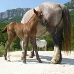 casa-rural-animales-caballos-2