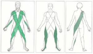 Fasce e catene muscolari