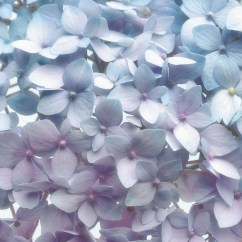 8-961 Light Blue