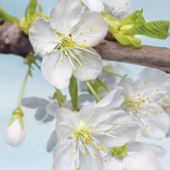 xxl2-033 Blossom
