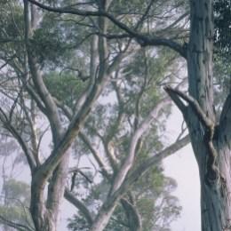 8-523 Fantasy Forest