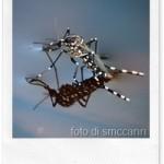 Curare le punture di zanzara con un gel naturale [fai da te]
