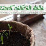 Piante e giardinaggio: fertilizzanti naturali dalla cucina