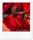 Piccoli segreti per salvare la stella di Natale