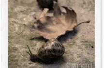 Combattere lumache e limacce con metodi naturali