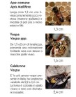 Punture di vespe, api o calabroni: che cosa fare?