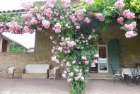 The portico in bloom