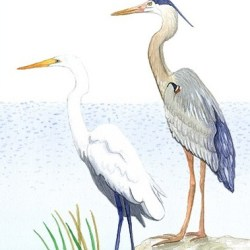 Casart Birds - egret and heron removable wall mural panel