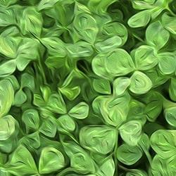 Clover Bloom Series - Ann Alger 1 for Casart coverings
