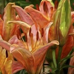 Casart coverings Orange Lily – Bloom Series by Ann Alger
