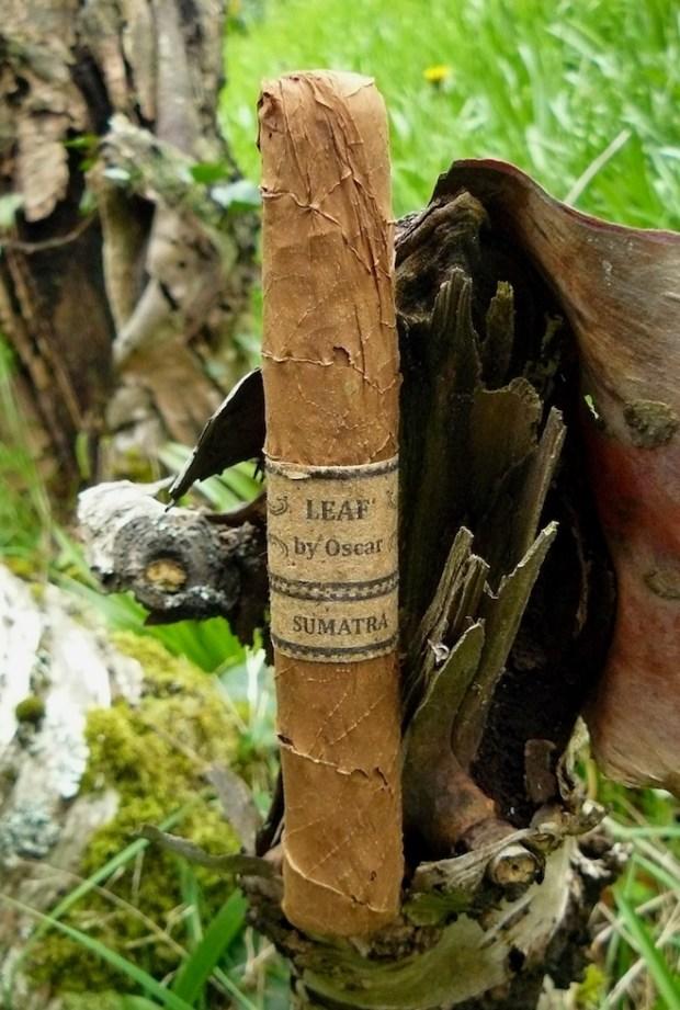 Leaf by Oscar Sumatra