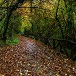 Senda del Oso, ruta fácil senderismo, bicicleta, Asturias. Ideal niños