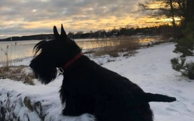 Can You Help Me Find A Scottie?