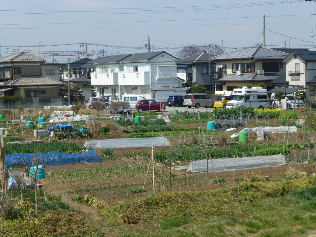 Community garden in Kawagoe