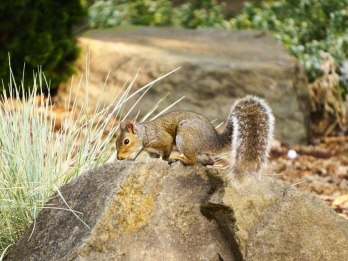 """Squirrels were very """"kawaii"""" according to students."""