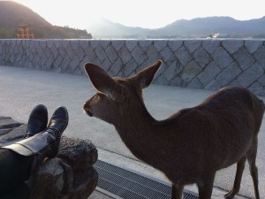 The deer on Miyajima can be a bit of a pest. This one was chewing and swallowing our map when I snapped this picture.