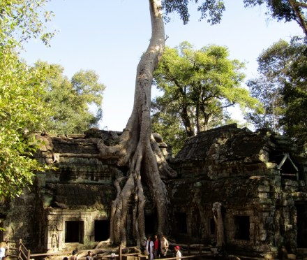 Day 3 of our Siem Reap adventure took us to some of the less-restored gems of Angkor, including Ta Prohmーthe 800-year-old co-star of Angelina Jolie in the first Tomb Raider movie. Many of the buildings have been reclaimed by the jungle, the sprawling roots of Spung trees tearing apart the temple brick by brick.