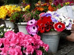 Flowers at the Campo de' Fiori market.