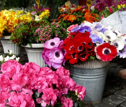 Flowers at the Campo de' Fiori market.