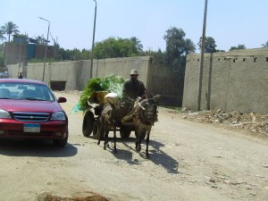 A local farmer in the Giza neighborhood near the school. Shot out the school bus.
