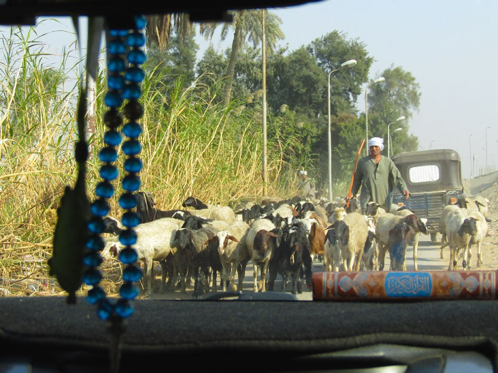 Goat traffic on the way to the riding school on a small, country road in Giza. This is not typical of Cairo traffic at all!