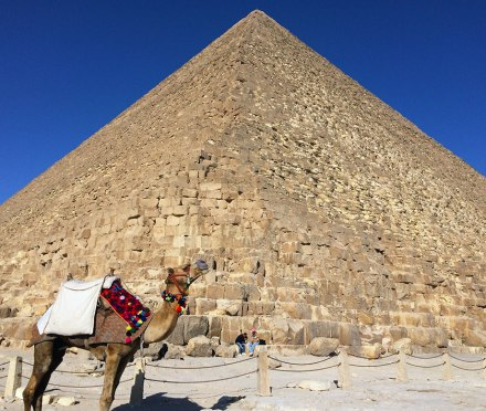 A camel poses in front of the Great Pyramid.