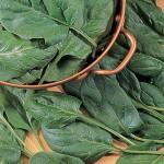 Spinach - baby leaf hybrid