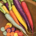 Carrot - Kaleidoscope Mix