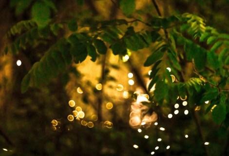 Lucciole e Linterne – Lusiroeula fai da Te