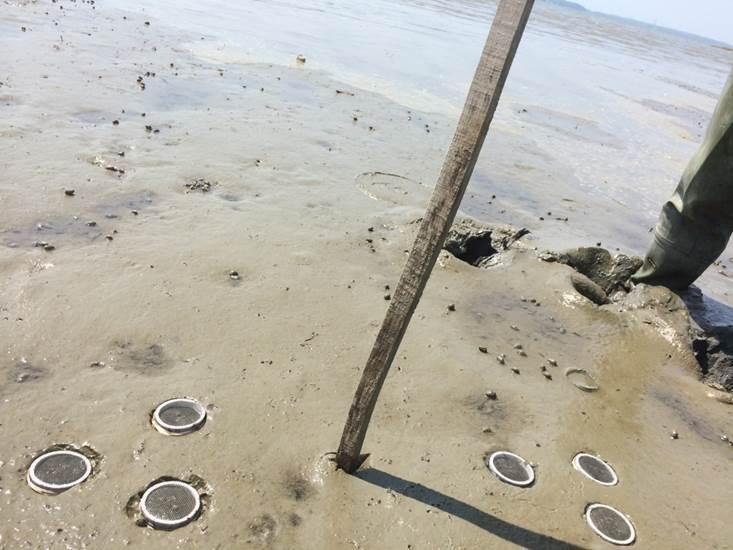 Clam condos in acidic mud