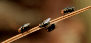 flies perched on a brown branch