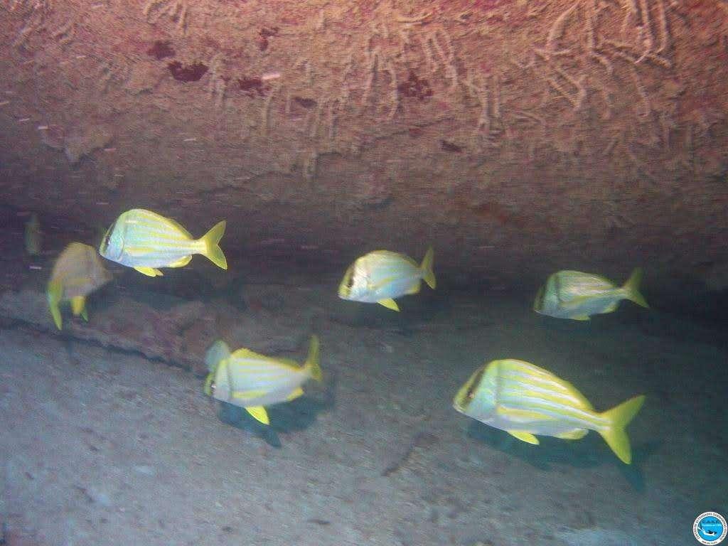 Viajando a bucear en las aguas brasileiras 29
