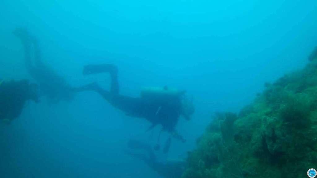 Viajando a bucear en las aguas brasileiras 42