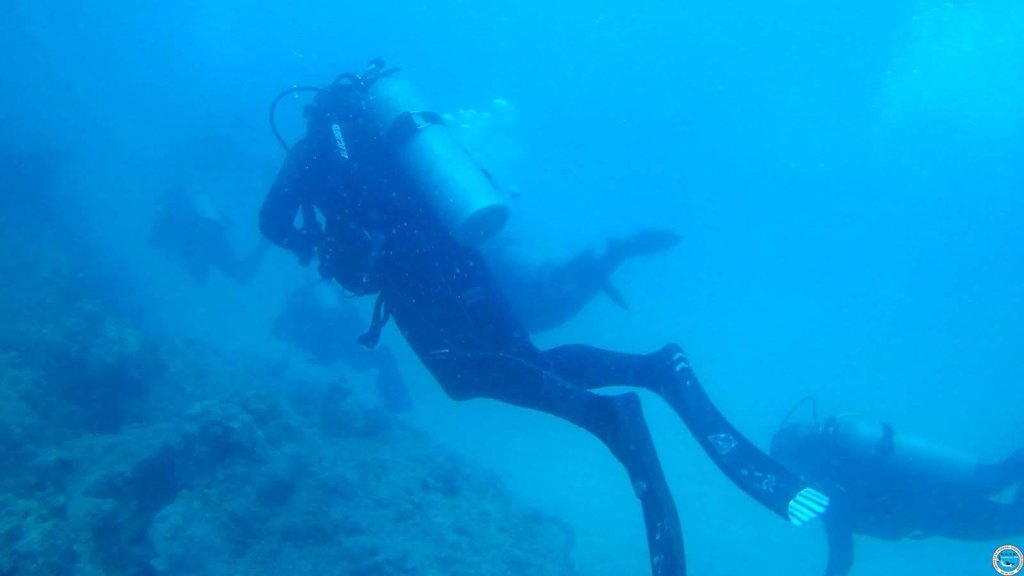 Viajando a bucear en las aguas brasileiras 49