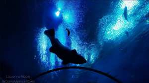 under water, fish tank, water shot FishFriday LetsGetWet