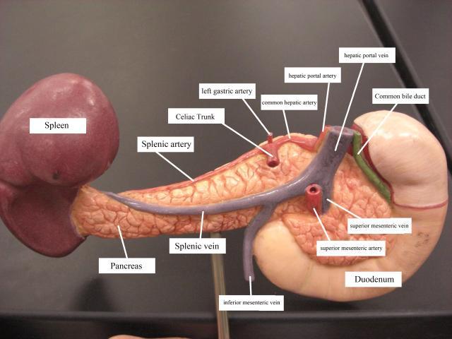 Preguntas Anatomía MIR 2012 - 2 febrero 2013 - casiMedicos