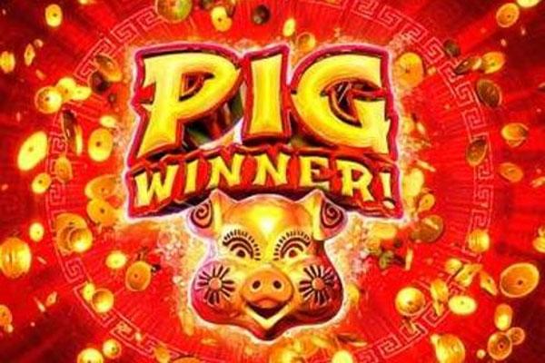 Pig Winner Slot Game