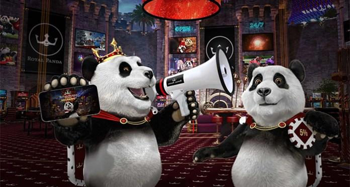 Royal Panda's Live Casino Action, Exclusive Studio Launch Celebration