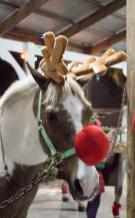 Reindeer Jericho