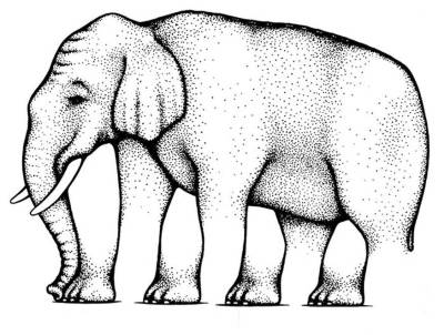 illusion-elephant-legs
