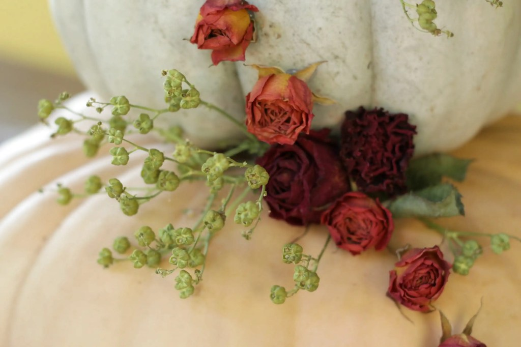 Roses and Rue on Pumpkins