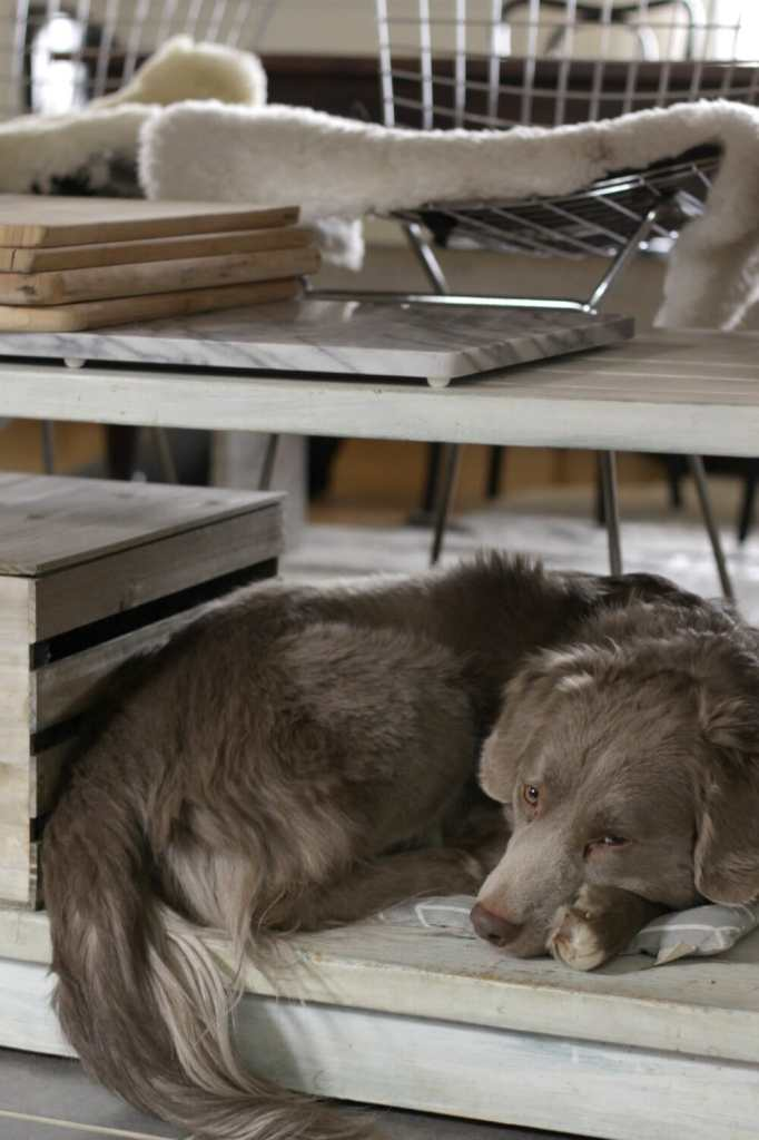 Dog Bed on Kitchen Island