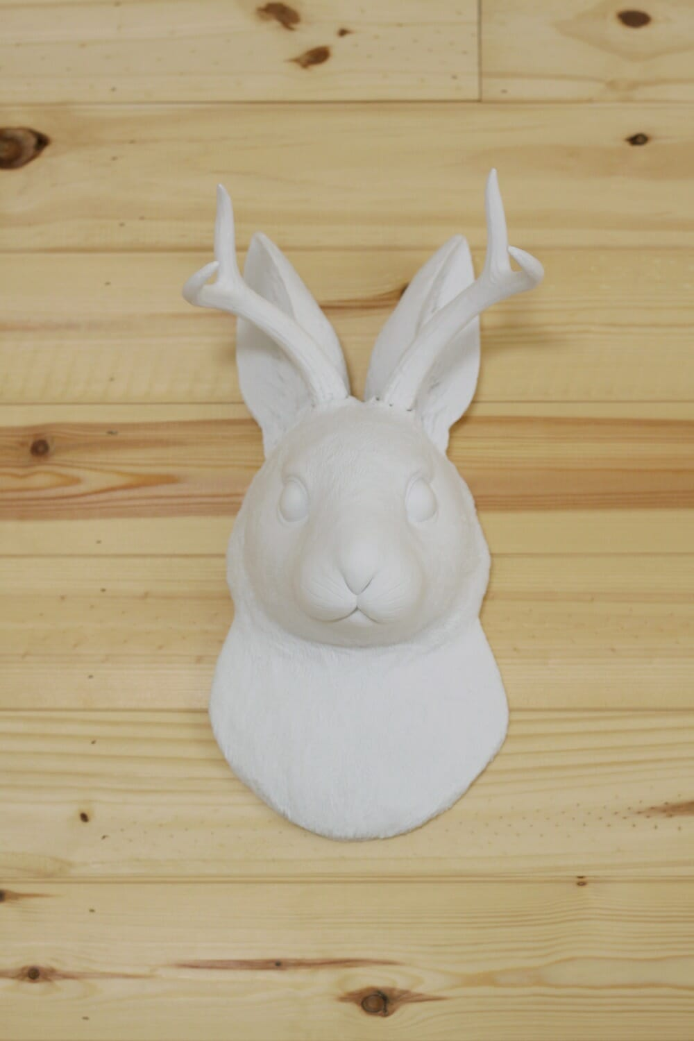 White Faux Taxidermy: The Jackalope - Cassie Bustamante