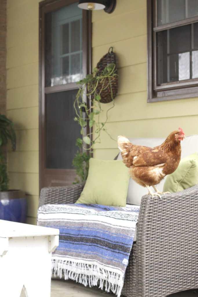 Friendly on Porch Loveseat