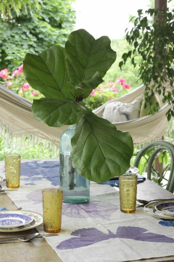 Fiddle leaf Fig in Vase
