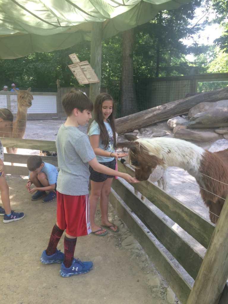 Catoctin Zoo Alpaca