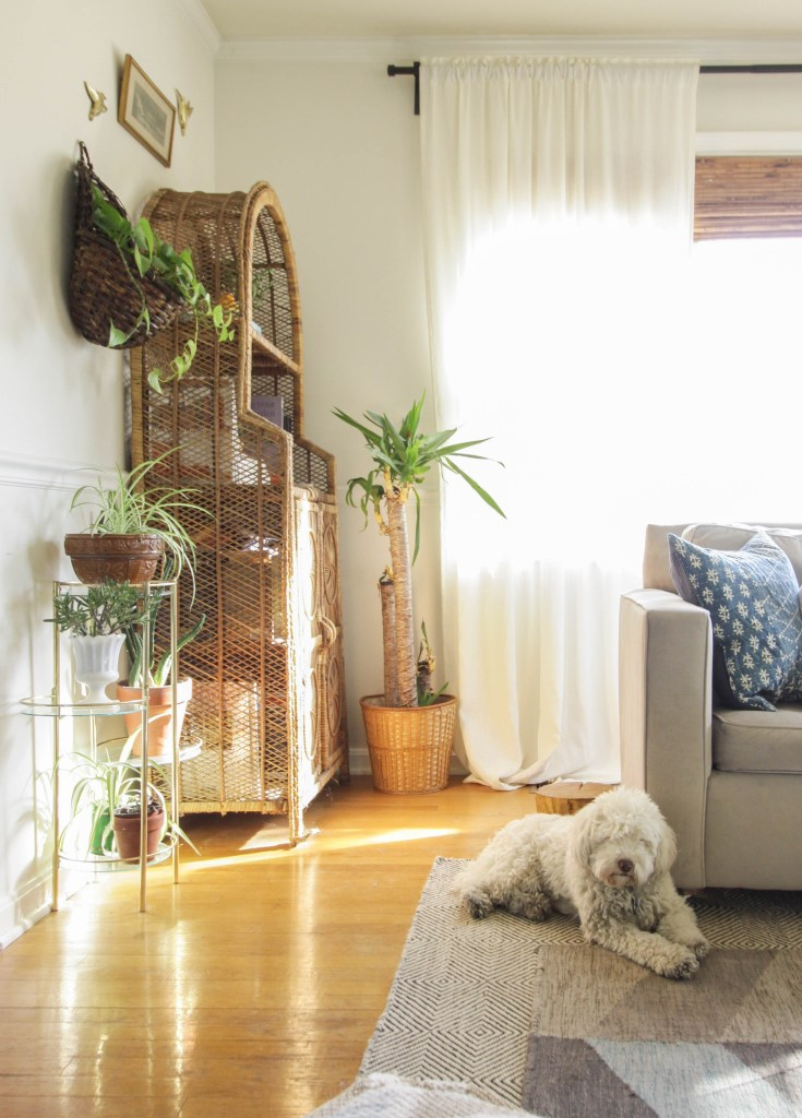 Vintage wicker shelf and plant corner in living room